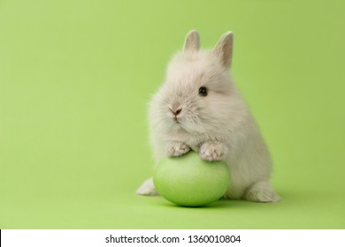 Easter bunny rabbit with green painted egg on green background. Easter holiday concept.