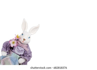 Easter bunny rabbit isolated on white background