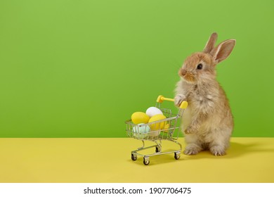 Easter bunny rabbit with shopping basket and sweet colorful eggs on green and yellow background