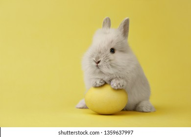 Easter bunny rabbit with yellow painted egg on yellow background. Easter holiday concept.