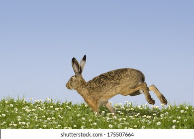 Easter bunny running across a field of flowers