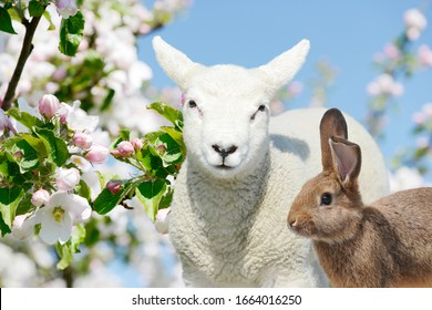 Easter Bunny and sheep lamb standing between blooming apple trees in spring