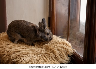 Easter bunny sitting near window. Happy Easter concept
