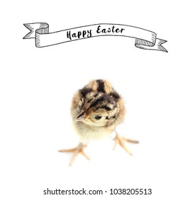 Easter card Baby pheasant on white