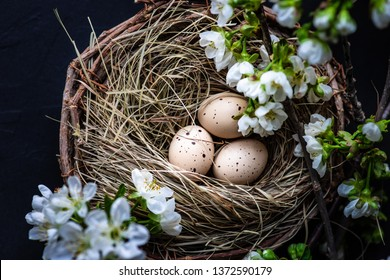 Easter card concept with nest full of eggs and blooming cherry on black stone background with copy space