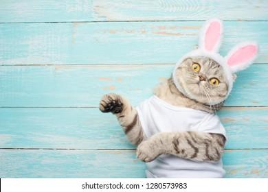 Easter cat with rabbit ears. Banner, Easter screensaver for design