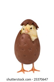 Easter chick coming out of a chocolate egg