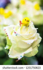 An Easter chick sits on a white rose flower. Easter concept. Spring flowers, spring holidays.