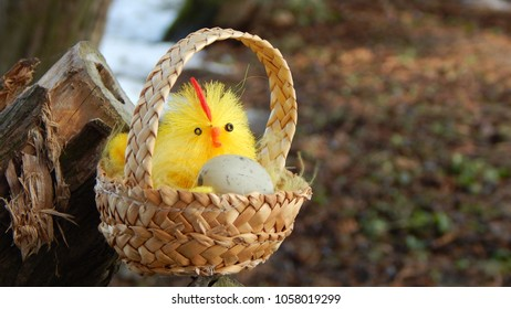 Easter chicken with an egg in straw basket hanging on wooden stump on blurred forest grass background