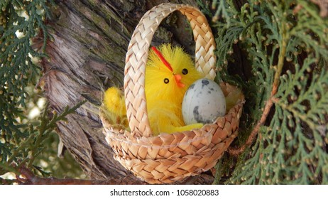 Easter chicken with an egg in straw basket on a tree