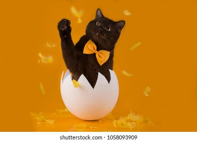 Easter chocolate cat hatched from egg on yellow isolated background