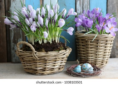 Easter composition with fresh crocus in round wicker basket, ceramic birds, porcelain egg in birch wreath, floral composition on aged, weathered wooden background, daylight, vintage style