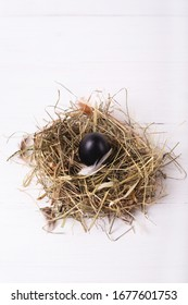 Easter composition with one chicken black egg in a nest of hay on a white wooden background