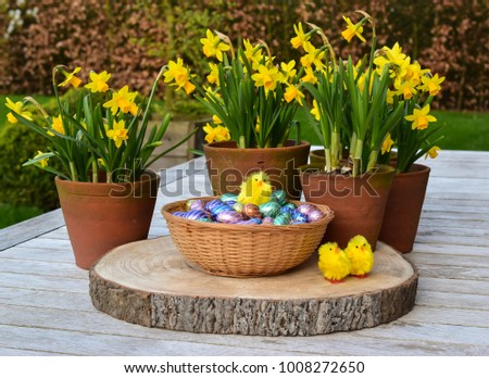 Easter concept yellow easter flowers narcissus stock photo edit now easter concept yellow easter flowers narcissus in terracotta flowerpot cute chicks and mightylinksfo