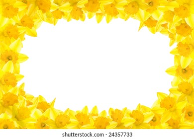 Easter daffodil border with white background