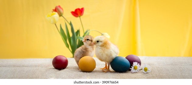 Easter decoration with cute Easter chicken