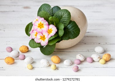 Easter decoration - primrose in an ostrich egg and little candy eggs on white  wooden background. Close up.