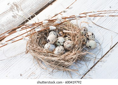 Easter decoration quail eggs lie in a bird's nest with willow twigs on a white wooden background, horizontal image, minimalism