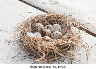 Easter decoration quail eggs lie in a bird's nest on a white wooden background, horizontal image, minimalism