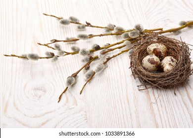 Easter decoration. Quail eggs  in the nest  and a branches of pussy-willow on a wooden background. Top view with copy space.