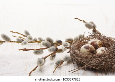 Easter decoration. Quail eggs  in the nest  and a branches of pussy-willow on a wooden table on white background. View with copy space.