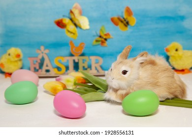 Easter decorations with multi-colored eggs, spring flowers and rabbit. Easter concept with copy space.