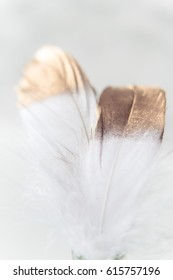 Easter decorations in the style of minimalism with with a gold feather
