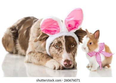Easter dog and rabbit