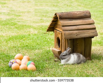 Easter with egg, baby bunny and wooden house on green grass