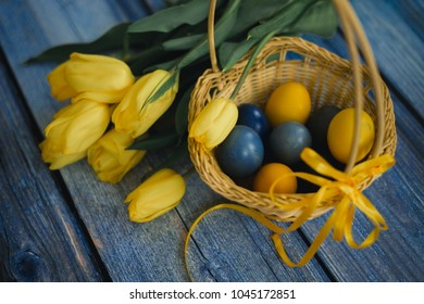 The Easter eggs in basket with yellow tulips on blue wooden background