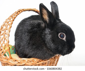 Easter eggs and bunny in a basket