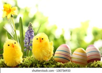 Easter eggs and chick on meadow with spring flower