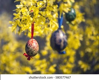 easter eggs hanging in laburnum tree