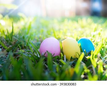 Easter eggs hunt in backyard, bright sun shine background