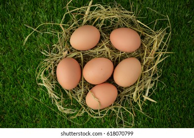 Easter eggs on hay.