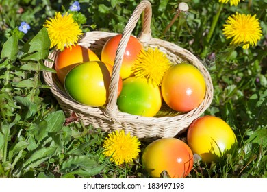 Easter Eggs on a Meadow with Flowers