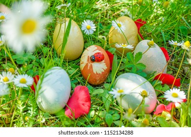 Easter eggs organized on the grass in the field of daisies. Festive background.