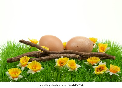 easter eggs in spring isolated on a white background