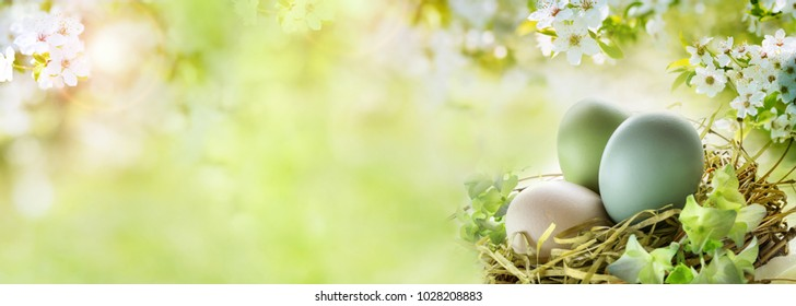 Easter eggs with white cherry blossoms and sunny green spring background for a easter card