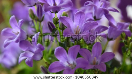 Easter flowers purple bell flower beautiful stock photo edit now easter flowers purple bell flower beautiful spring background with campanula bouquet mightylinksfo