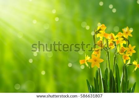 Easter Flowers Sunshine Stock Photo Edit Now 586631807 Shutterstock