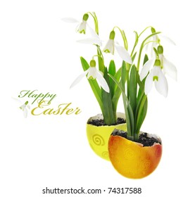 Easter Greeting Snowdrop Flowers Growing in Egg Shells
