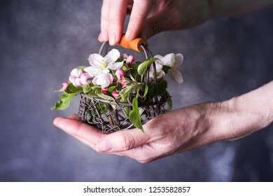 Easter. Hands holding a basket with flowering apple tree branches