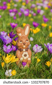 Easter holidays concept. Easter sweet chocolate bunny or rabbit on the background of green grass and spring crocus flowers.
