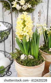 Easter home decoration with yellow hyacinth flowers.