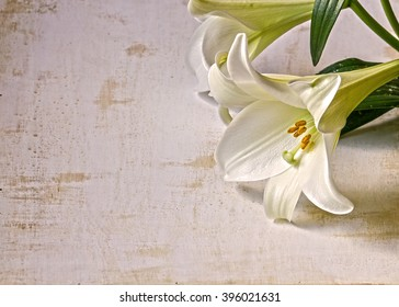 An easter lily on a white grunge background.