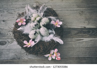 Easter nest with eggs and pink flowers. Easter background.