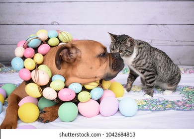 Easter portrait of a boxer breed dog and a tabby cat