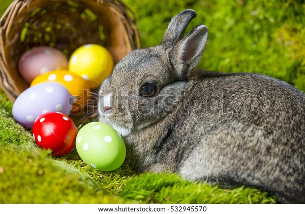 easter rabbit and easter eggs