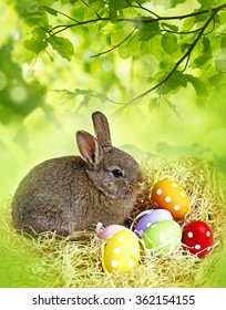 easter rabbit and easter eggs - white background